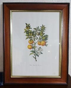 イタリア製 輸入小物 壁掛け用額絵162933