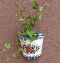 ポルトガル製陶器のウォールポット 植木鉢 穴あき 鉢カバー 574W