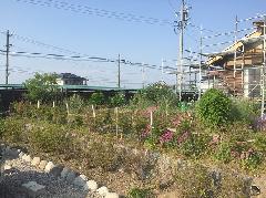 光福寺 お花畑の工事