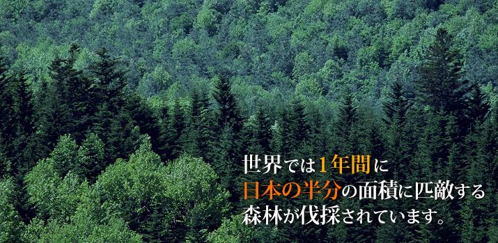 世界では一年間に日本の半分の面積に匹敵する森林が伐採されています。