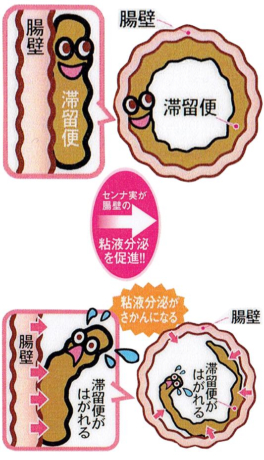 腸の粘液分泌を促進し便を流しやすくするイメージ