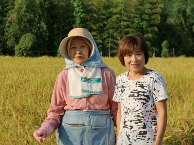 【予約販売】29年産 三重県赤目 横山さんの減農薬特別栽培コシヒカリ 玄米5kg 【精米無料!】