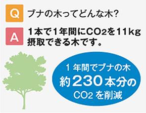 1年間でブナの木約230本分のCO2を削減