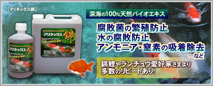 腐敗菌の繁殖防止 錦鯉やランチュウ愛好家様より多数のリピートあり!