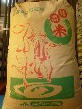 【送料無料】30年産(新米)  徳島県産阿南限定こしひかり 玄米30kg