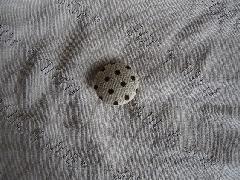 透かし柄ベア天竺 M5728 オフ英字