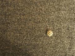 ガーゼ裏毛 チャコール杢 M4680
