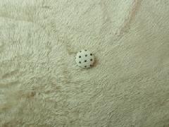 フェイクファー ベージュ M7576