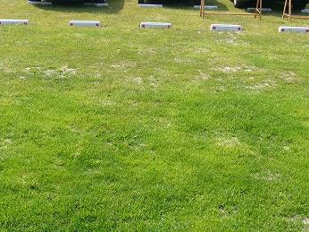 駐車場工事 芝舗装 小牧市