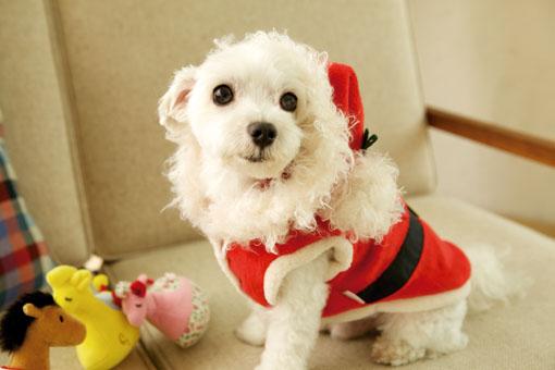 サンタクロース♪  大型犬用も有りますヨ!(7号,8号)