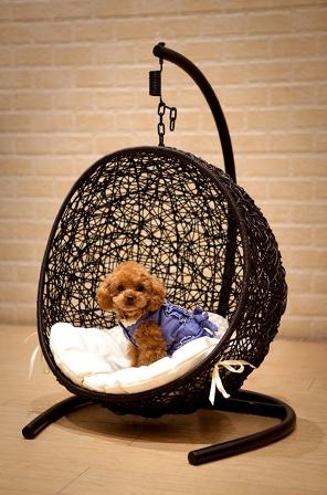 犬 猫 ミニハンギング