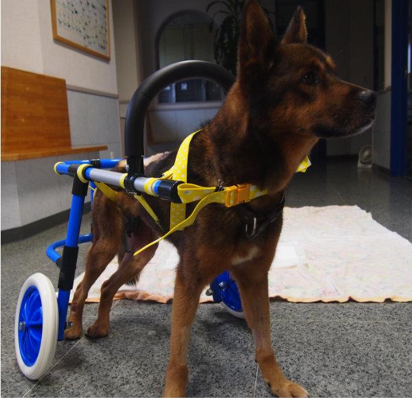 犬の車いす 2輪タイプ 超小型犬用