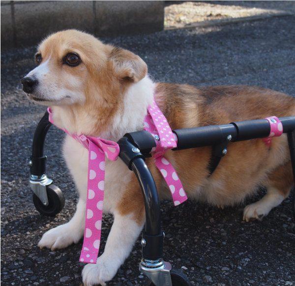 犬の車いす 4輪タイプ 小型犬用