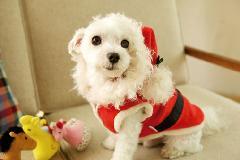 サンタクロース♪  大型犬用も有りますヨ!(XS-4号)