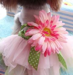 超可愛いペット服