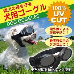 ワンちゃんだって目がつらい!散歩中の愛犬の目を紫外線やゴミから守る!犬用ゴーグル