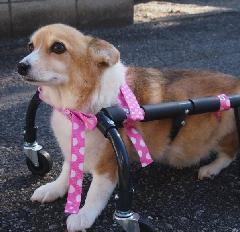 犬の車いす 4輪タイプ 中型犬用