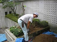 植栽の植え替え