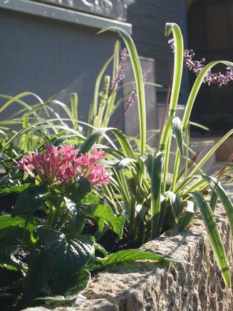 優しい風情のお庭に仕上がりました!