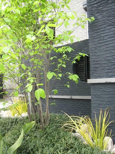 黒壁を円形にくり抜いた穴にも人工黒竹の飾り