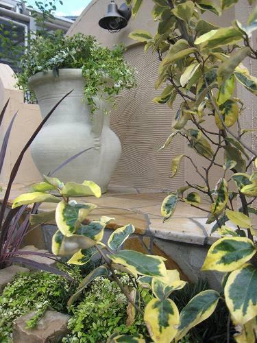 黄色斑入りが凄く特徴的なナワシログミ・ギルドエッジ