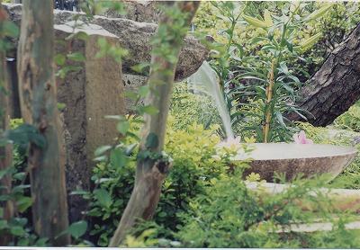 Japanese garden09