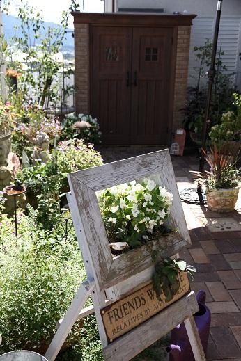 カンナのある庭