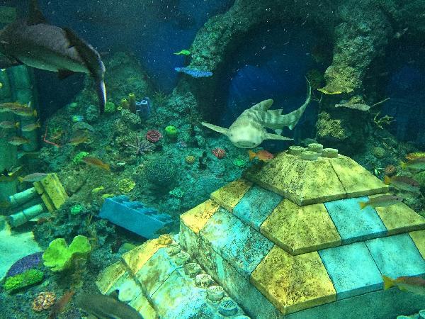 ホンモノのサメとレゴのコラボ