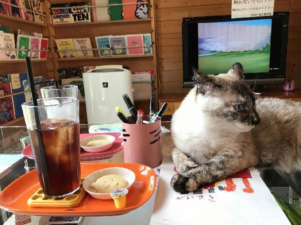 猫カフェ机の上