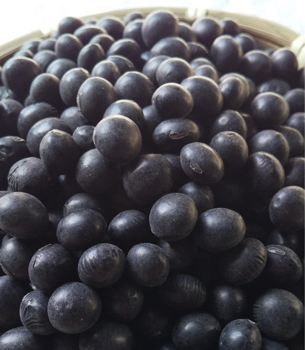 北海道光黒大豆