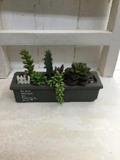ミニ柱サボテンの寄せ植え