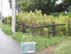 柵まわりに草が生い茂った状態。