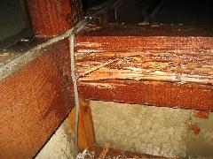 天井裏の被害