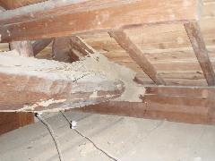 天井裏に巣