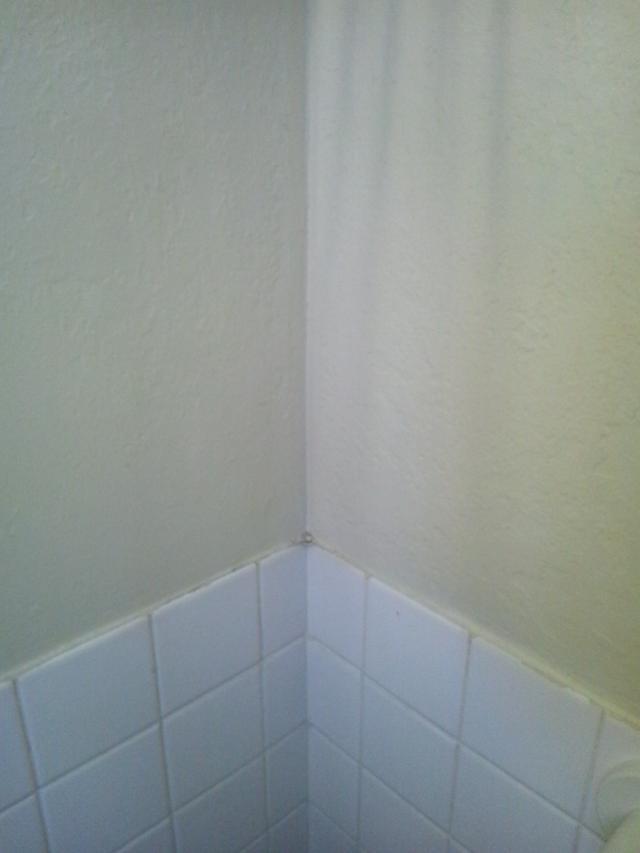 タイル風呂の壁