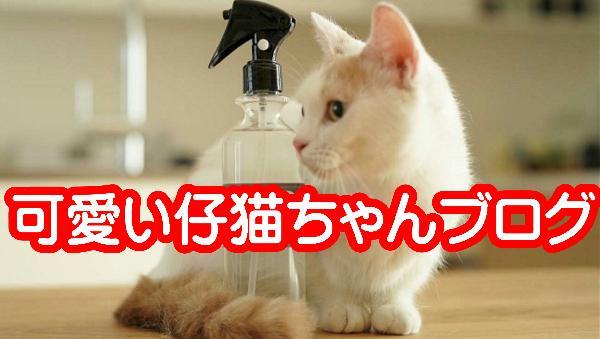 最新の仔猫ちゃん情報です