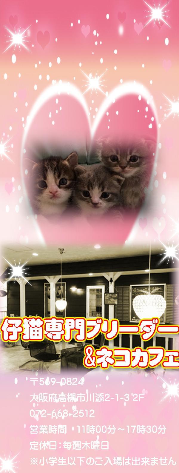 猫専門ブリーダー&猫カフェ