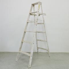 5ステップ エイジングラダー (ホワイト)