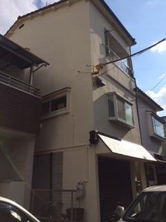 藤井寺市 N様邸 外壁ガイナ塗装工事施工例