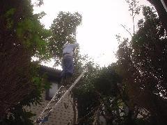 植木工事6〜10