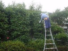 植木工事10