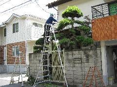 植木工事 めいわ