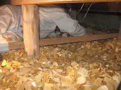床下チップ工事 シロアリ対策