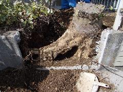 根っこ掘り工事