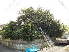 植木工事 佐倉市