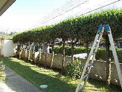 H25  植木工事 千城台