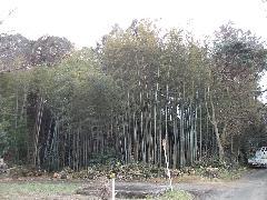 大木伐採 佐倉市