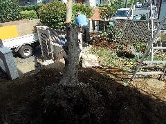 H27 植木工事 根っこ堀 こてはし