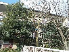 H28 植木工事 千葉市