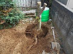 植木工事 根っこ掘り 四街道市